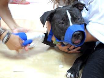 Curso de Ayudante técnico veterinario. ATV VeterinariaCurso de Auxiliar Técnico Veterinario. curso de auxiliar de veterinaria