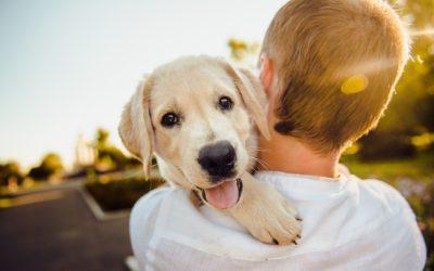 El perro y sus orígenes